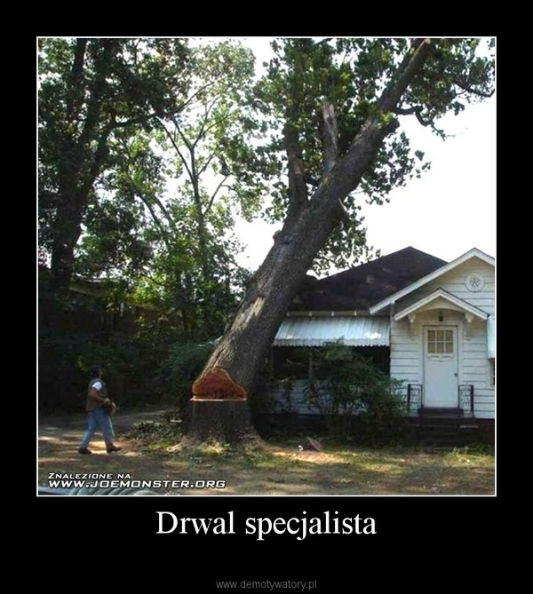 Drwal specjalista –