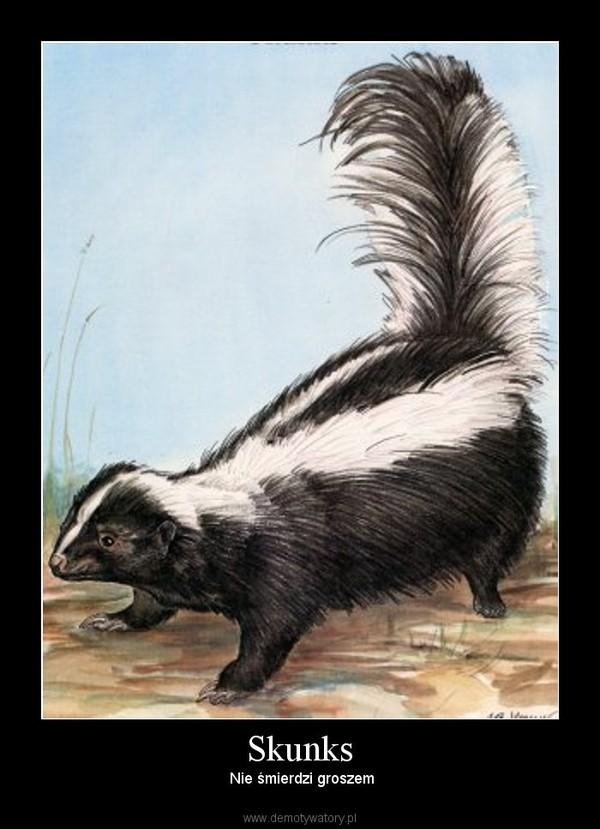 Skunks – Nie śmierdzi groszem