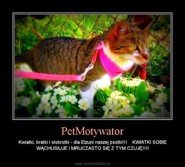 PetMotywator – Kwiatki, bratki i stokrotki - dla Elzuni naszej psotki!!!    KWIATKI SOBIE WĄCHUSIUJE I MRUCZASTO SIĘ Z TYM CZUJĘ!!!!