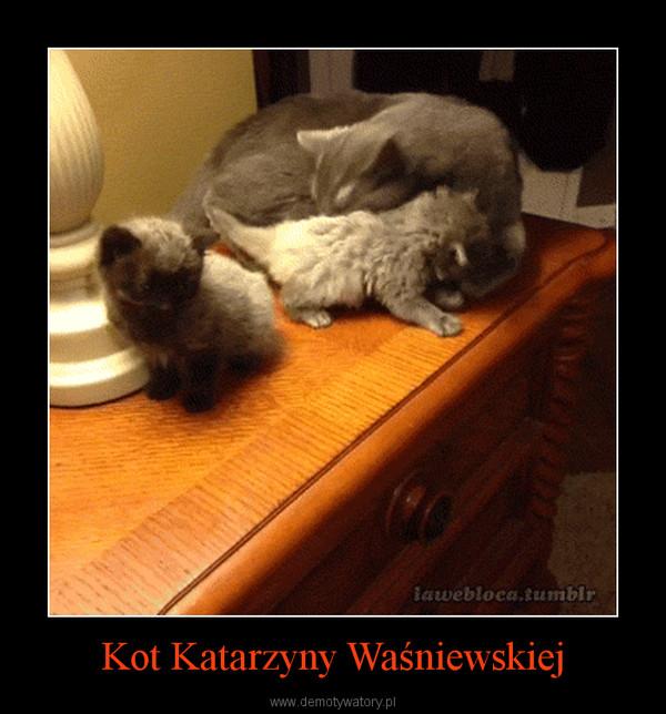 Kot Katarzyny Waśniewskiej –