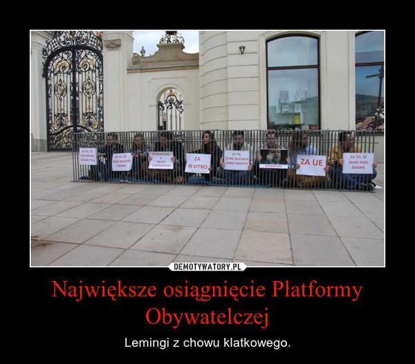 Największe osiągnięcie Platformy Obywatelczej – Lemingi z chowu klatkowego.