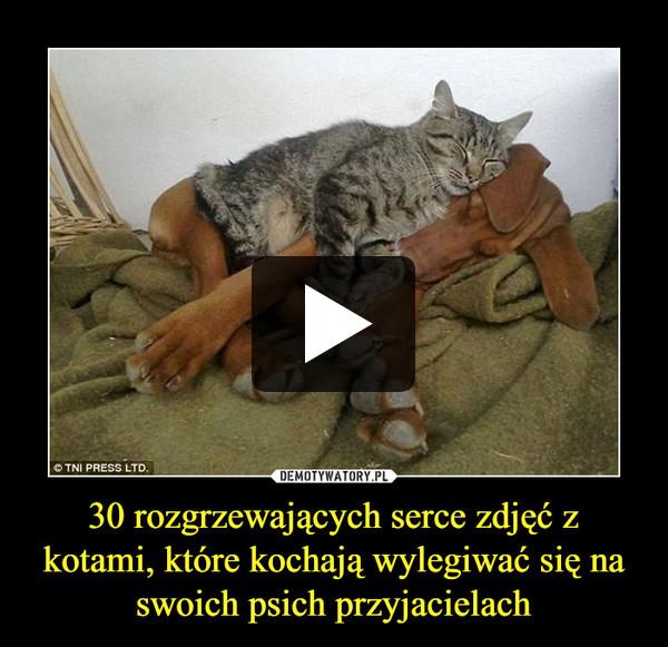 30 rozgrzewających serce zdjęć z kotami, które kochają wylegiwać się na swoich psich przyjacielach –