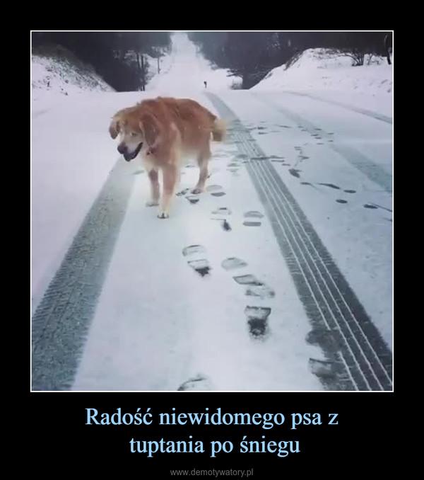 Radość niewidomego psa z tuptania po śniegu –