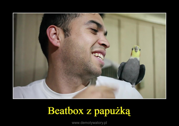 Beatbox z papużką –