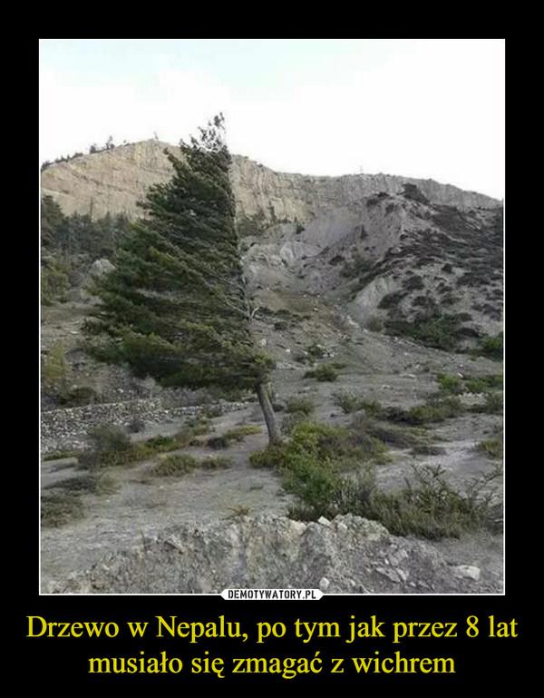 Drzewo w Nepalu, po tym jak przez 8 lat musiało się zmagać z wichrem –