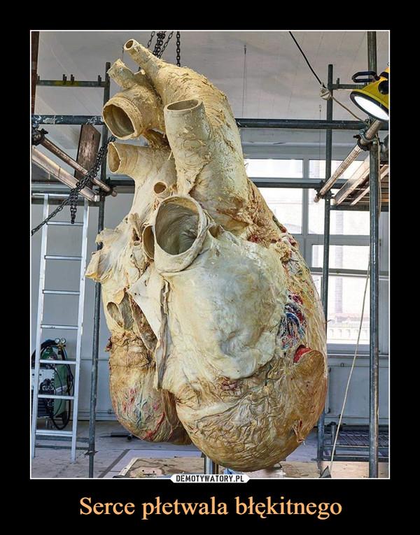 Serce płetwala błękitnego –