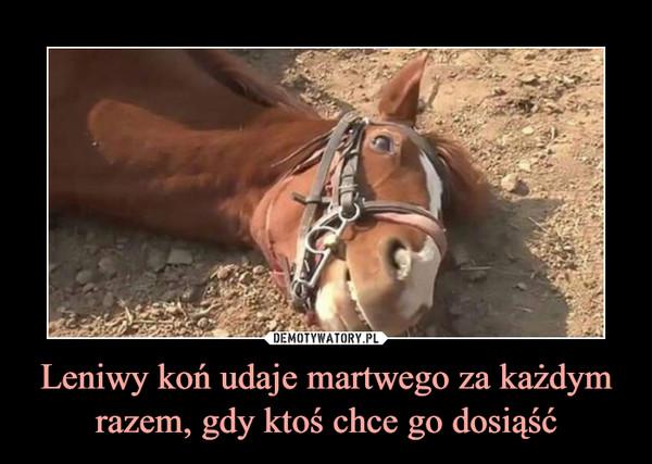 Leniwy koń udaje martwego za każdym razem, gdy ktoś chce go dosiąść –