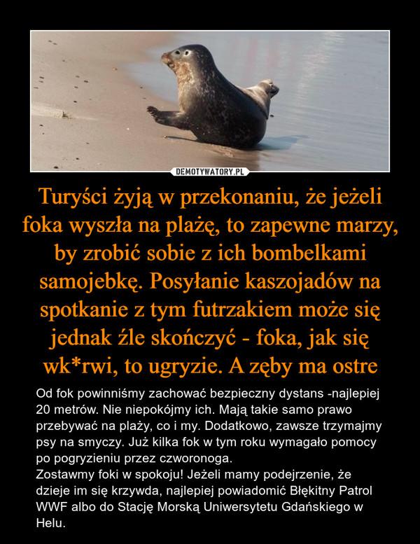 Turyści żyją w przekonaniu, że jeżeli foka wyszła na plażę, to zapewne marzy, by zrobić sobie z ich bombelkami samojebkę. Posyłanie kaszojadów na spotkanie z tym futrzakiem może się jednak źle skończyć - foka, jak się wk*rwi, to ugryzie. A zęby ma ostre – Od fok powinniśmy zachować bezpieczny dystans -najlepiej 20 metrów. Nie niepokójmy ich. Mają takie samo prawo przebywać na plaży, co i my. Dodatkowo, zawsze trzymajmy psy na smyczy. Już kilka fok w tym roku wymagało pomocy po pogryzieniu przez czworonoga. Zostawmy foki w spokoju! Jeżeli mamy podejrzenie, że dzieje im się krzywda, najlepiej powiadomić Błękitny Patrol WWF albo do Stację Morską Uniwersytetu Gdańskiego w Helu.