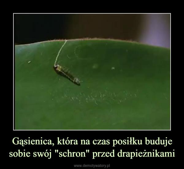 """Gąsienica, która na czas posiłku buduje sobie swój """"schron"""" przed drapieżnikami –"""