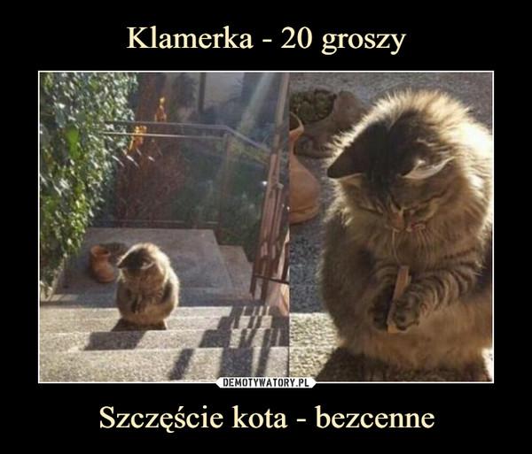 Szczęście kota - bezcenne –