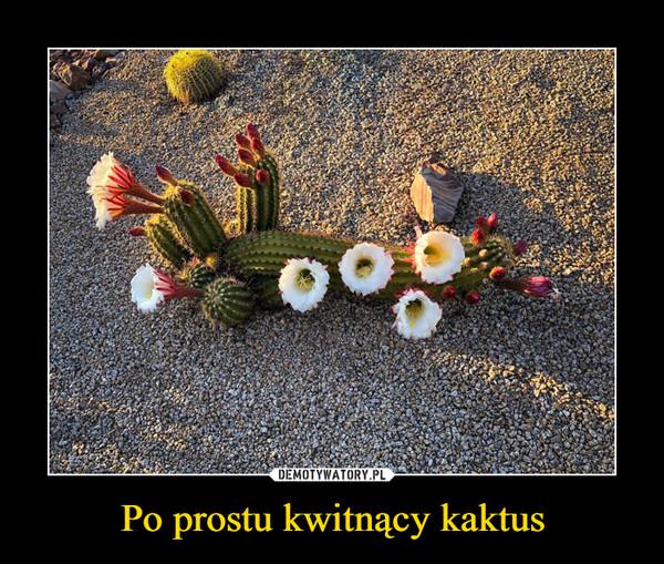 Po prostu kwitnący kaktus –