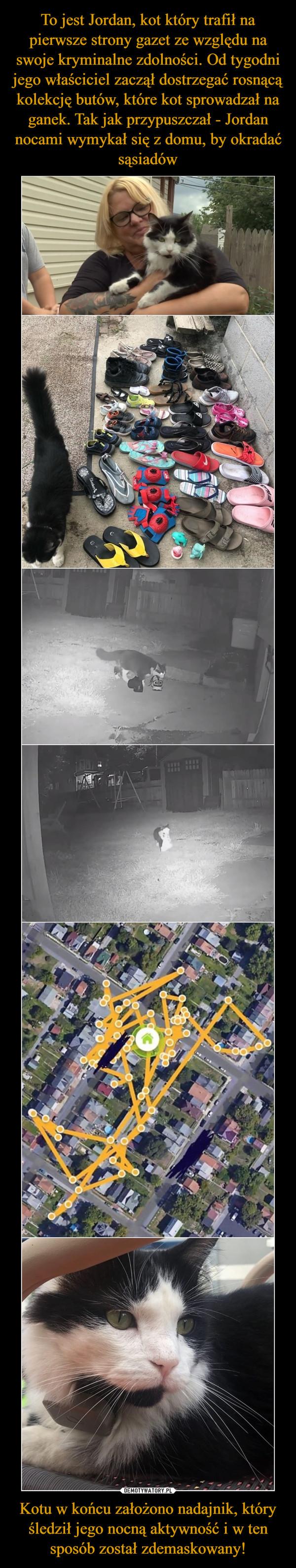 To jest Jordan, kot który trafił na pierwsze strony gazet ze względu na swoje kryminalne zdolności. Od tygodni jego właściciel zaczął dostrzegać rosnącą kolekcję butów, które kot sprowadzał na ganek. Tak jak przypuszczał - Jordan nocami wymykał się z domu, by okradać sąsiadów Kotu w końcu założono nadajnik, który śledził jego nocną aktywność i w ten sposób został zdemaskowany!