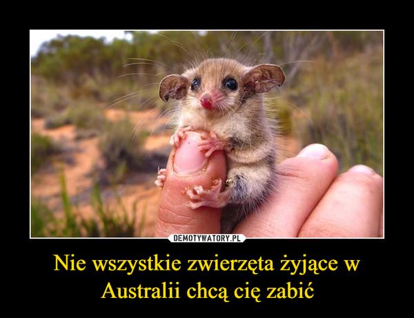 Nie wszystkie zwierzęta żyjące w Australii chcą cię zabić –