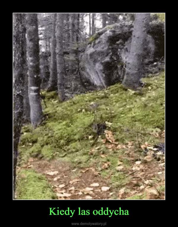 Kiedy las oddycha –