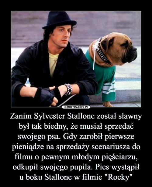 """Zanim Sylvester Stallone został sławny był tak biedny, że musiał sprzedać swojego psa. Gdy zarobił pierwsze pieniądze na sprzedaży scenariusza do filmu o pewnym młodym pięściarzu, odkupił swojego pupila. Pies wystąpił u boku Stallone w filmie """"Rocky"""""""