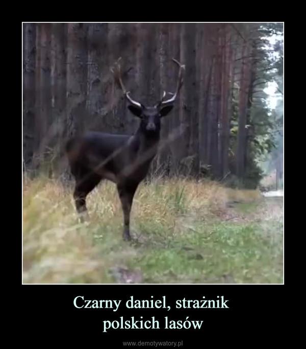 Czarny daniel, strażnik polskich lasów –