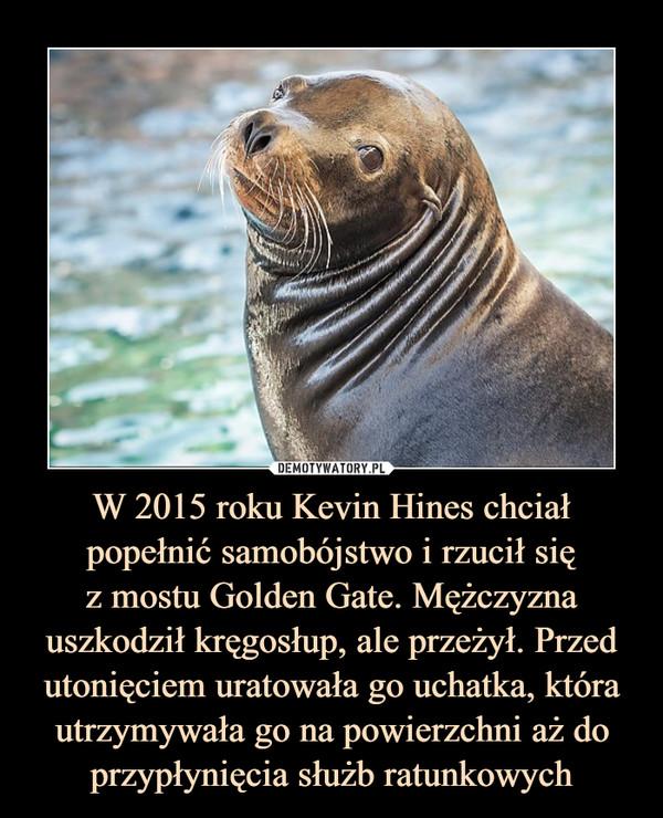 W 2015 roku Kevin Hines chciał popełnić samobójstwo i rzucił sięz mostu Golden Gate. Mężczyzna uszkodził kręgosłup, ale przeżył. Przed utonięciem uratowała go uchatka, która utrzymywała go na powierzchni aż do przypłynięcia służb ratunkowych –