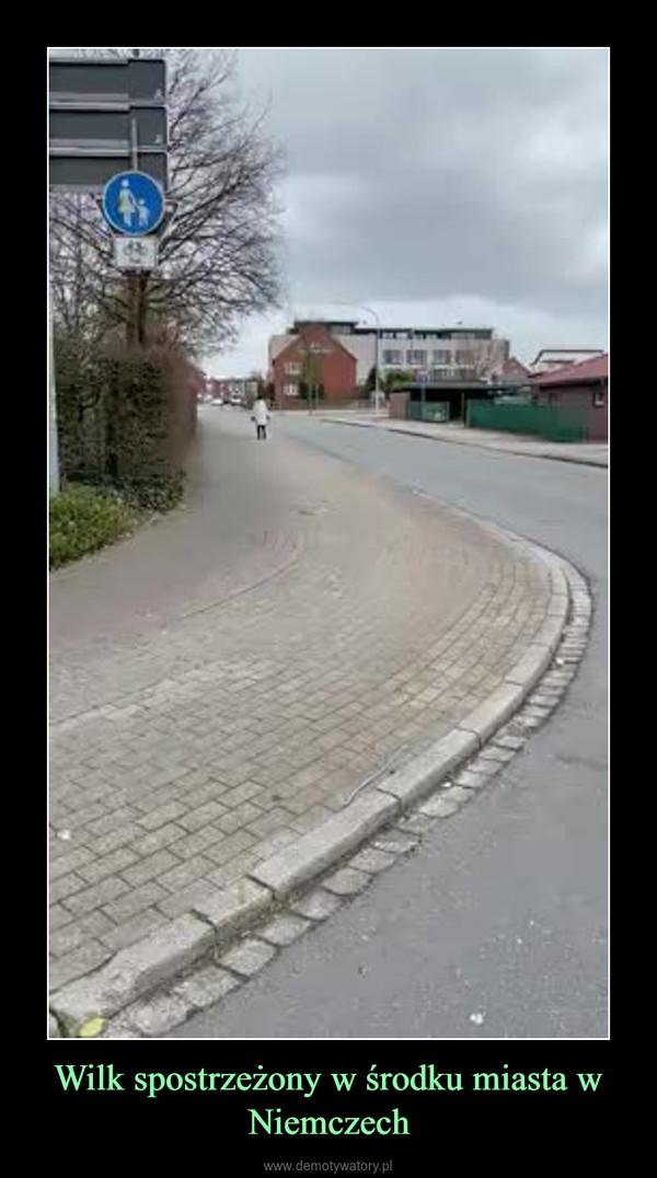 Wilk spostrzeżony w środku miasta w Niemczech –