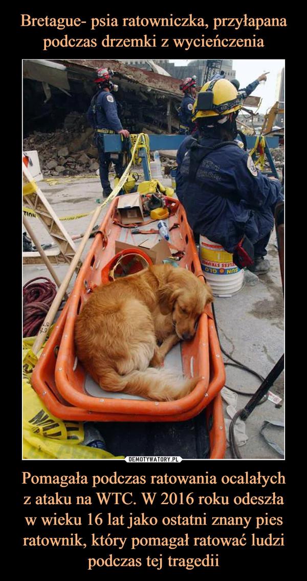 Pomagała podczas ratowania ocalałychz ataku na WTC. W 2016 roku odeszław wieku 16 lat jako ostatni znany pies ratownik, który pomagał ratować ludzi podczas tej tragedii –