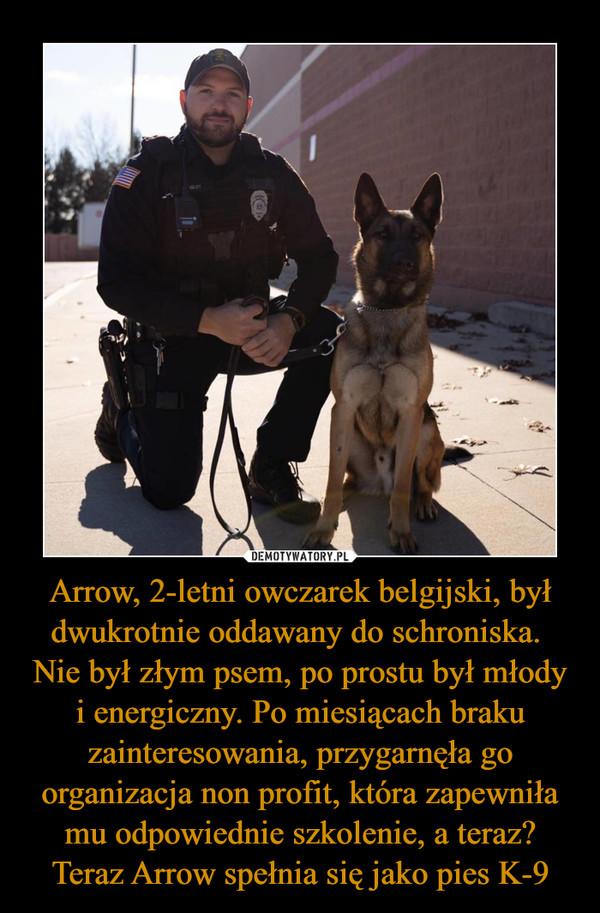 Arrow, 2-letni owczarek belgijski, był dwukrotnie oddawany do schroniska.  Nie był złym psem, po prostu był młody i energiczny. Po miesiącach braku zainteresowania, przygarnęła go organizacja non profit, która zapewniła mu odpowiednie szkolenie, a teraz? Teraz Arrow spełnia się jako pies K-9