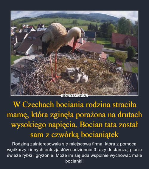 W Czechach bociania rodzina straciła mamę, która zginęła porażona na drutach wysokiego napięcia. Bocian tata został sam z czwórką bocianiątek
