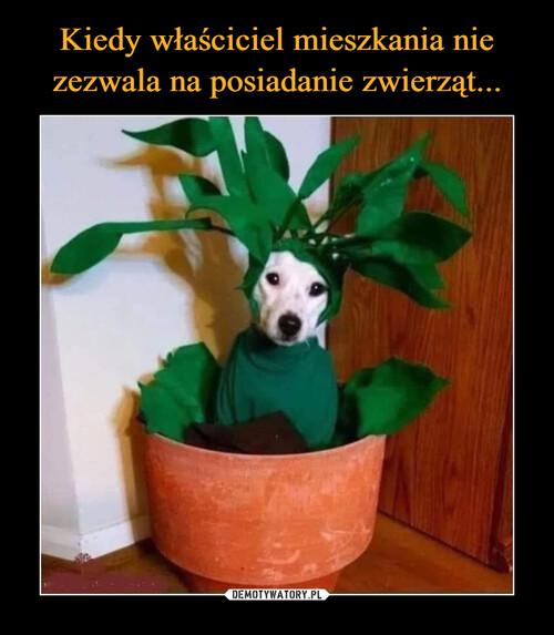 Kiedy właściciel mieszkania nie zezwala na posiadanie zwierząt...