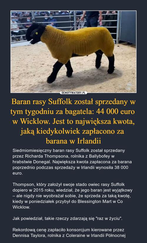 Baran rasy Suffolk został sprzedany w tym tygodniu za bagatela: 44 000 euro  w Wicklow. Jest to największa kwota, jaką kiedykolwiek zapłacono za  barana w Irlandii