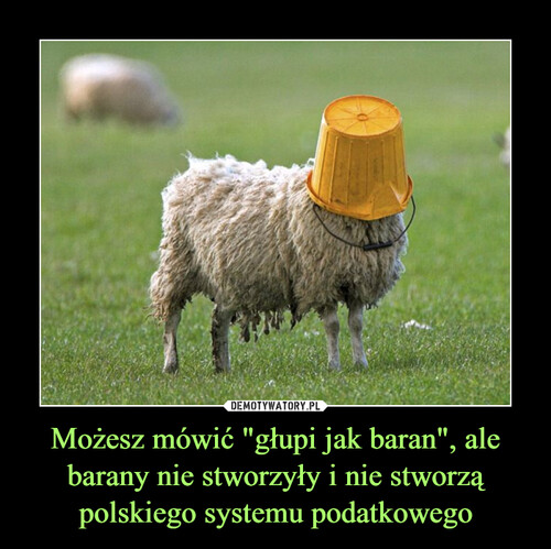 """Możesz mówić """"głupi jak baran"""", ale barany nie stworzyły i nie stworzą polskiego systemu podatkowego"""