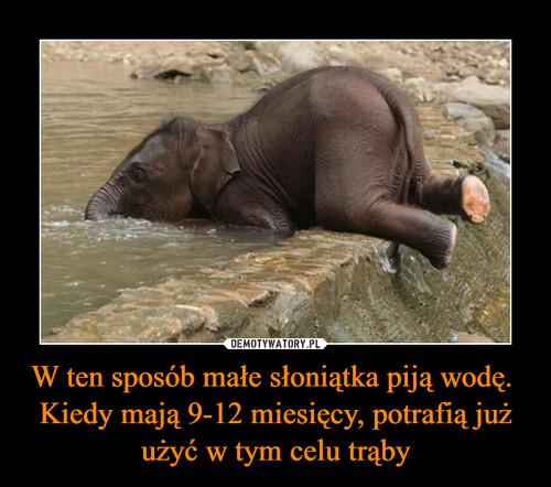 W ten sposób małe słoniątka piją wodę.  Kiedy mają 9-12 miesięcy, potrafią już użyć w tym celu trąby